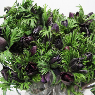 Anemone Bordeaux for Weddings, Events and DIY Brides. Wedding Florist in Fairfield, NJ 07004