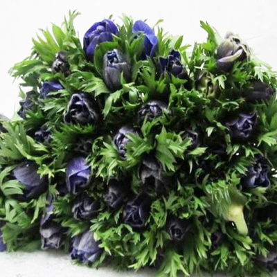 Anemone Marianne Blue for Weddings, Events and DIY Brides. Wedding Florist in Fairfield, New Jersey 07004
