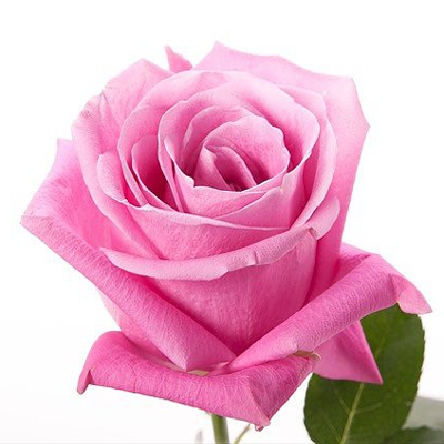 Soulmate Roses Wholesale to the Public, DIY Weddings and Events