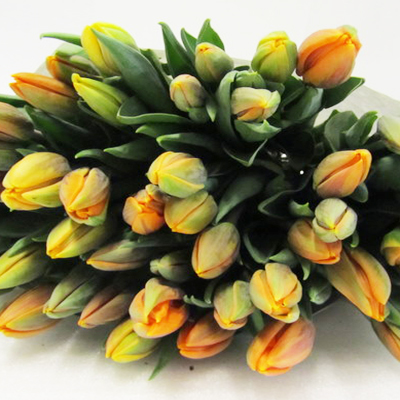Princess Irene Tulips For Weddings, Events and DIY Brides. Wedding Florist in Fairfield, NJ