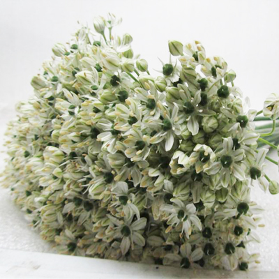 Allium Nigrum Wholesale to the Public, DIY Weddings and Events