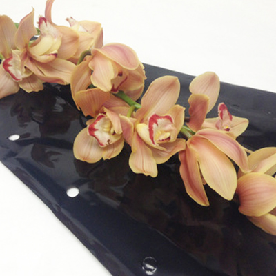 Cymbidium Amalia Wholesale Florist Open to the Public, DIY Weddings and Events