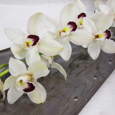 Cymbidium Danny Green Wholesale Florist Open to the Public, DIY Weddings and Events