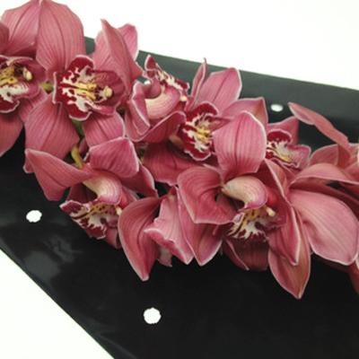 Cymbidium Ferrari Wholesale Florist Open to the Public, DIY Weddings and Events
