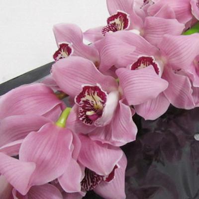 Cymbidium Fireglow Wholesale Florist Open to the Public, DIY Weddings and Events