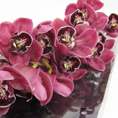Cymbidium Fury Hades Wholesale Florist Open to the Public, DIY Weddings and Events