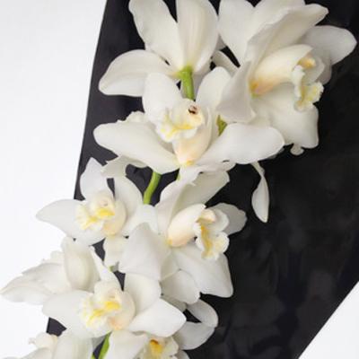 Cymbidium Vanilla Ice Wholesale Florist Open to the Public, DIY Weddings and Events