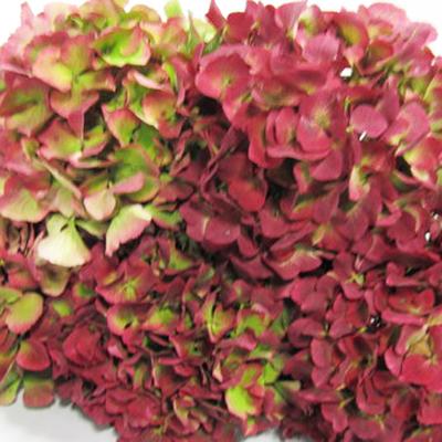 Hydrangea Sapphire Antique Wholesale Florist Open To the Public, DIY Weddings and Events