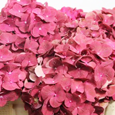 Hydrangea Terracotta Wholesale Florist Open To The Public, DIY Weddings and Events