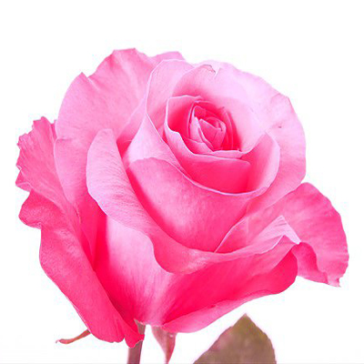 Thrill Roses for Weddings, Events and DIY Brides. Wedding Florist in Fairfield, NJ 07004