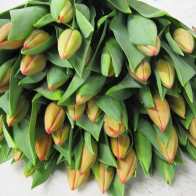 Ad Rem Tulips for Weddings, Events and DIY Brides. Wedding Florist in Fairfield, NJ