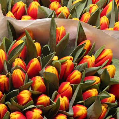 Andre Citroen Tulips for Weddings, Events and DIY Brides. Wedding Florist in Fairfield, NJ