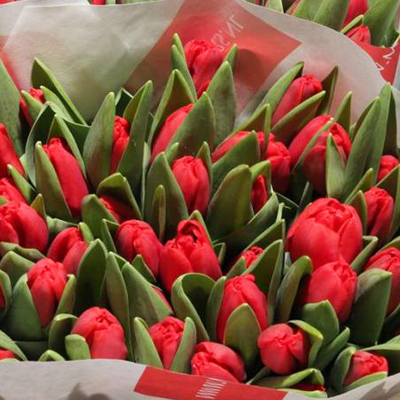 Escape Tulips for Weddings, Events and DIY Brides. Wedding Florist in Fairfield, NJ