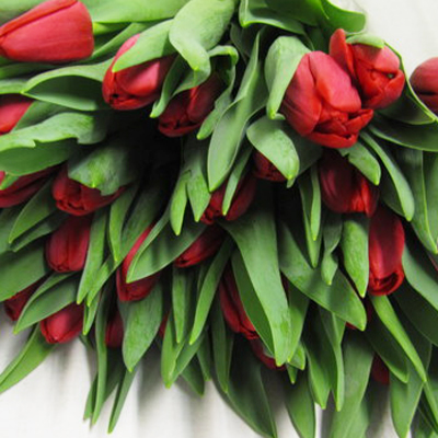 Ile De France Tulips for Weddings, Events and DIY Brides. Wedding Florist in Fairfield NJ