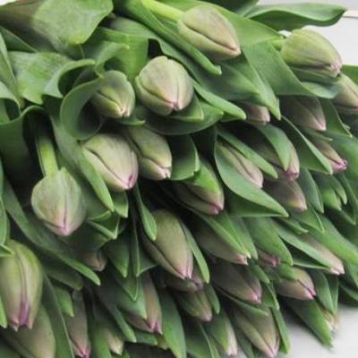 Saigon Tulips for Weddings, Events and DIY Brides. Wedding Florist in Fairfield NJ