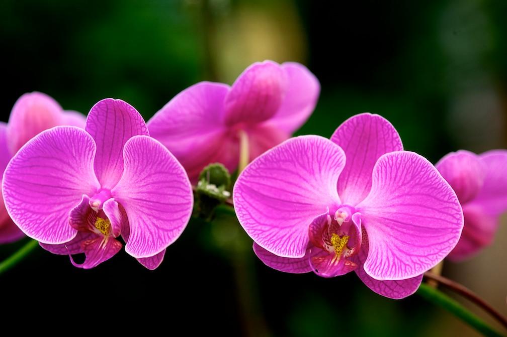 fairfield-nj-retail-florist-nj-wedding-flowers