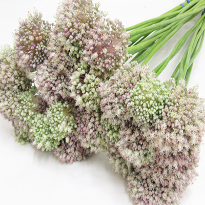 Allium Ampeloprasum Wholesale to the Public, DIY Weddings and Events