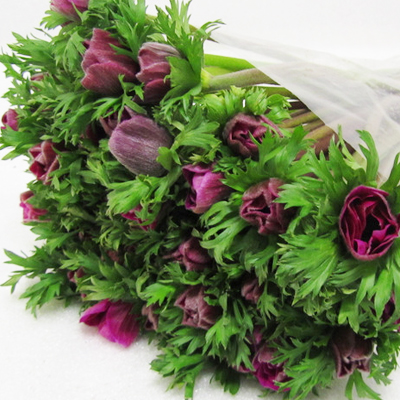Anemone Marianne Orchid for Weddings, Events and DIY Brides. Wedding Florist in Fairfield, New Jersey 07004