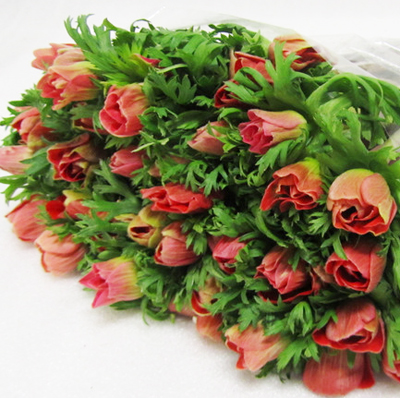 Anemone Marianne Red for Weddings, Events and DIY Brides. Wedding and Event Florist in Fairfield NJ