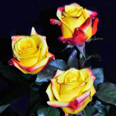 Tressor 2000 Roses Wholesale To The Public, DIY Weddings and Events
