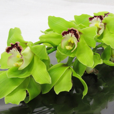 Cymbidium Alice Anderson Wholesale Florist Open to the Public, DIY Weddings and Events