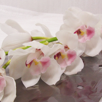 Cymbidium Dos Pueblos Wholesale Florist Open to the Public, DIY Weddings and Events