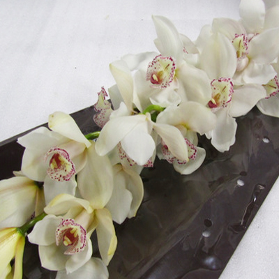 Cymbidium Snowbird Wholesale Florist Open to the Public, DIY Weddings and Events