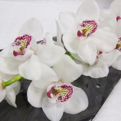 Cymbidium Vanity Wholesale Florist Open to the Public