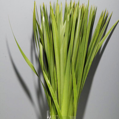 Typha Leaves for Weddings, Events and DIY Brides. Wedding Florist in Fairfield NJ