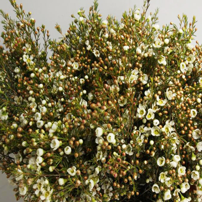 Wax Flower Blondie for Weddings, Events and DIY Brides. Wedding Florist in Fairfield, NJ 07004