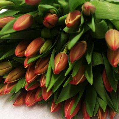 Furand Tulips foe Weddings, Events and DIY Brides. Wedding Florist in Fairfield, NJ